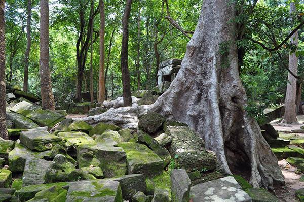 angkorpark,rainforest-of-angkor-park,angkortourism